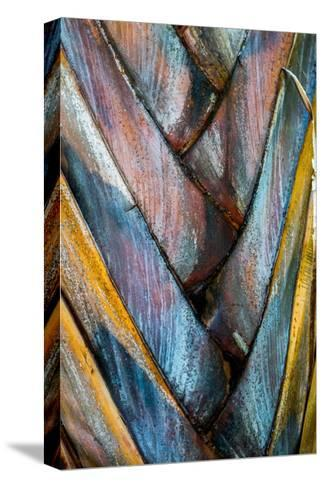 Palm Puzzle-Jean Bryan-Stretched Canvas Print