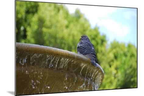 Pigeon on Sausalito Fountain, Marin County, California-Anna Miller-Mounted Photographic Print