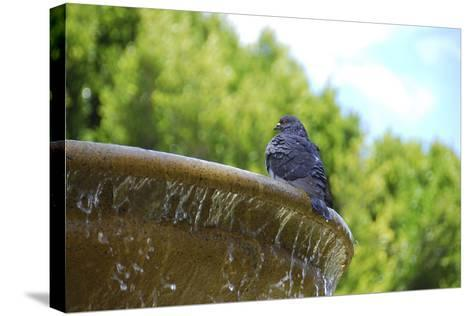 Pigeon on Sausalito Fountain, Marin County, California-Anna Miller-Stretched Canvas Print