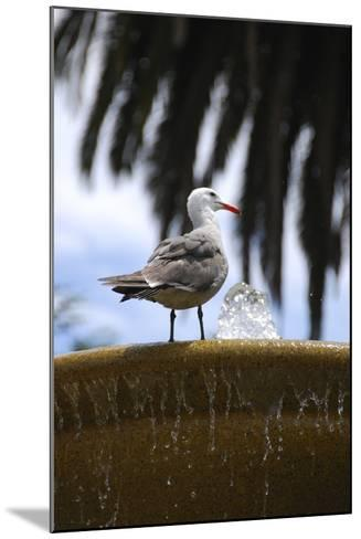 Seagul on Sausalito Fountain, Marin County, California-Anna Miller-Mounted Photographic Print