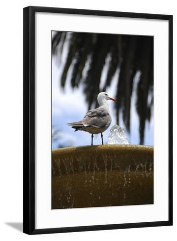 Seagul on Sausalito Fountain, Marin County, California-Anna Miller-Framed Art Print