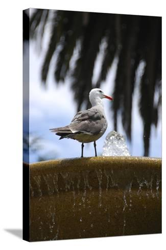 Seagul on Sausalito Fountain, Marin County, California-Anna Miller-Stretched Canvas Print