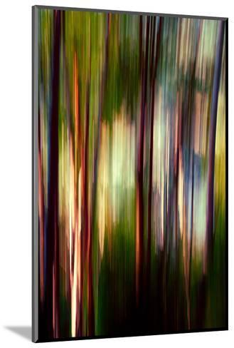 Trees-Ursula Abresch-Mounted Photographic Print