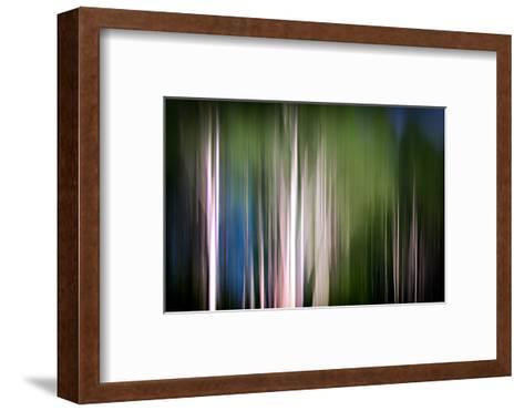 Spring Birches-Ursula Abresch-Framed Art Print
