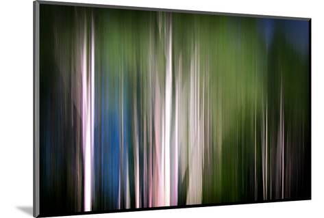 Spring Birches-Ursula Abresch-Mounted Photographic Print