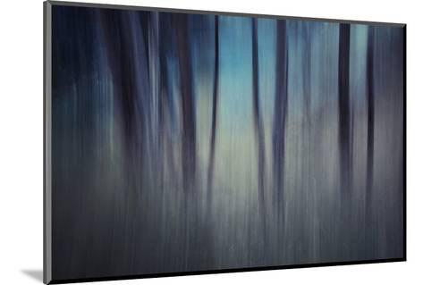Evening Woods-Ursula Abresch-Mounted Photographic Print
