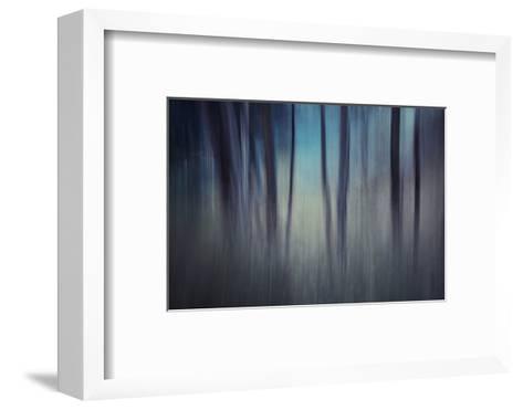 Evening Woods-Ursula Abresch-Framed Art Print