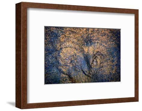 The Trees Have Eyes-Ursula Abresch-Framed Art Print