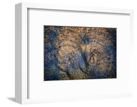 The Trees Have Eyes-Ursula Abresch-Framed Art Print