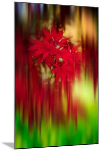 Red Instrumental-Philippe Sainte-Laudy-Mounted Photographic Print