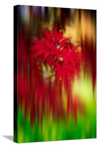 Red Instrumental-Philippe Sainte-Laudy-Stretched Canvas Print