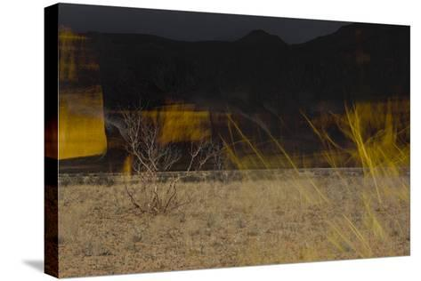 Flame Trees, Namibia-Valda Bailey-Stretched Canvas Print