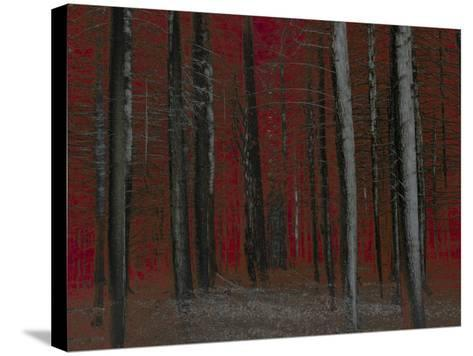 Red Sky at Night-Valda Bailey-Stretched Canvas Print