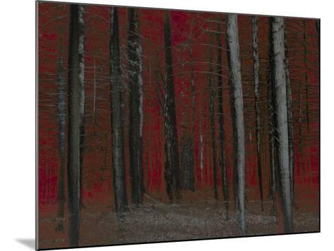 Red Sky at Night-Valda Bailey-Mounted Photographic Print