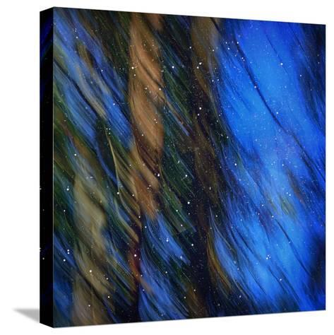 Stardust on Pines-Ursula Abresch-Stretched Canvas Print