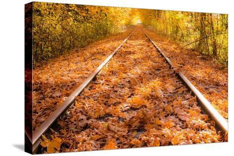 Train Tracks in the Fall-Tim Oldford-Stretched Canvas Print