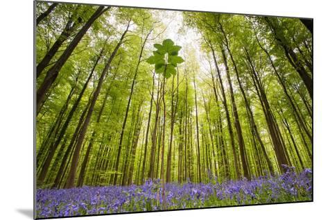 Hallerbos-Wilco Dragt-Mounted Photographic Print