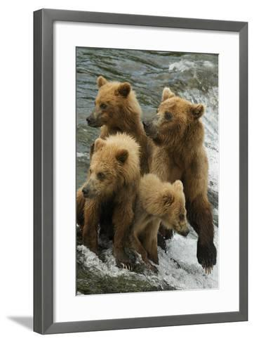 Brown Bear Family Bothered by Another Bear Approaching-Barrett Hedges-Framed Art Print