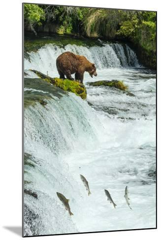 Brown Bear, Ursus Arctos, Fishing for Sockeye Salmon at Brooks Falls-Ralph Lee Hopkins-Mounted Photographic Print