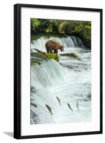 Brown Bear, Ursus Arctos, Fishing for Sockeye Salmon at Brooks Falls-Ralph Lee Hopkins-Framed Art Print