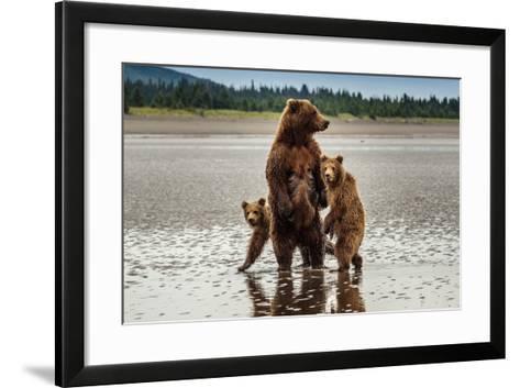 Coastal Brown Bear Family at Sliver Salmon Creek in Lake Clark National Park, Alaska-Ralph Lee Hopkins-Framed Art Print