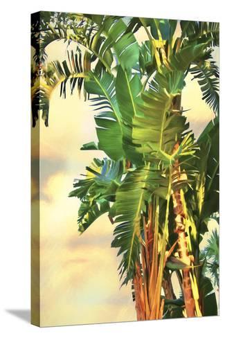 Bird of Paradise Palm II-Melinda Bradshaw-Stretched Canvas Print