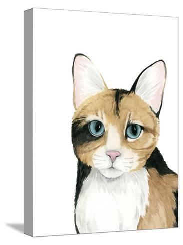Cat Portrait II-Grace Popp-Stretched Canvas Print
