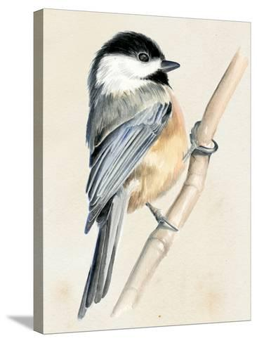 Little Bird on Branch II-Jennifer Paxton Parker-Stretched Canvas Print