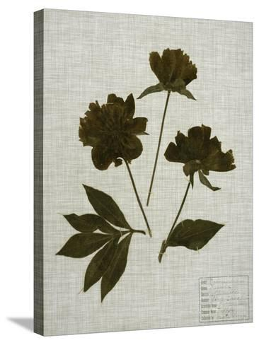 Pressed Leaves on Linen II-Vision Studio-Stretched Canvas Print