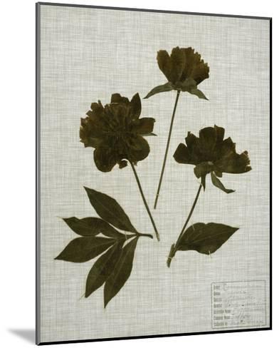 Pressed Leaves on Linen II-Vision Studio-Mounted Art Print