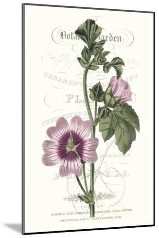 Flower Garden Varietals IV-Vision Studio-Mounted Premium Giclee Print