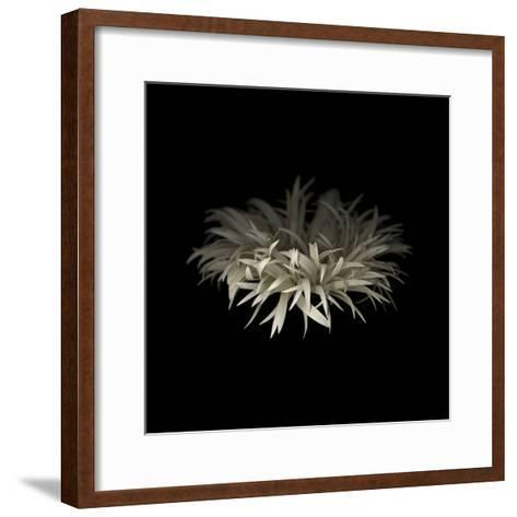 Darkness G5: Gerbera Daisy-Doris Mitsch-Framed Art Print