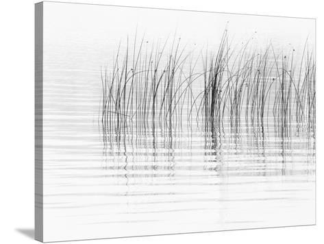 USA, New York State. River reeds, St. Lawrence River, Thousand Islands.-Chris Murray-Stretched Canvas Print