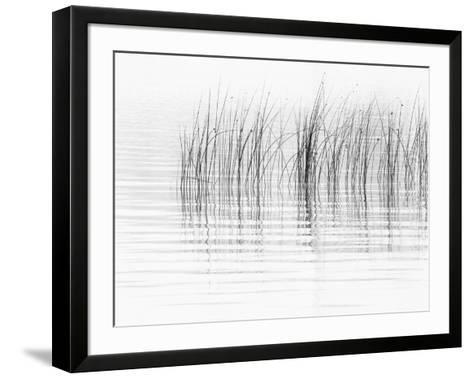 USA, New York State. River reeds, St. Lawrence River, Thousand Islands.-Chris Murray-Framed Art Print
