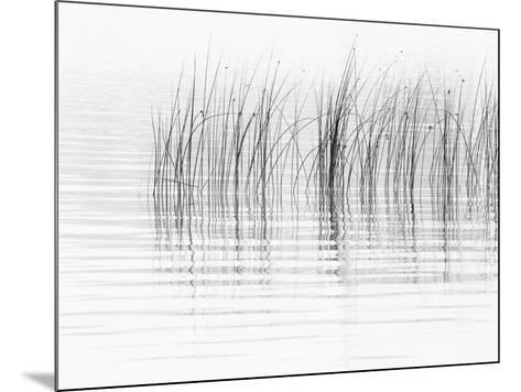 USA, New York State. River reeds, St. Lawrence River, Thousand Islands.-Chris Murray-Mounted Photographic Print