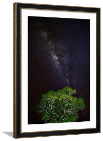 Light painted tree in the foreground with the Milky Way Galaxy in the Pantanal, Brazil-James White-Framed Art Print