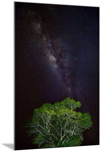 Light painted tree in the foreground with the Milky Way Galaxy in the Pantanal, Brazil-James White-Mounted Photographic Print
