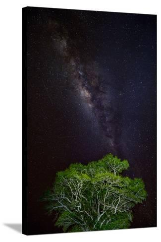 Light painted tree in the foreground with the Milky Way Galaxy in the Pantanal, Brazil-James White-Stretched Canvas Print