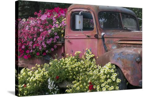 USA, Alaska, Chena Hot Springs. Old truck and flowers.-Jaynes Gallery-Stretched Canvas Print