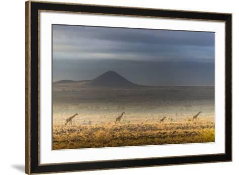 Masai giraffes, Amboseli National Park, Kenya-Art Wolfe-Framed Art Print