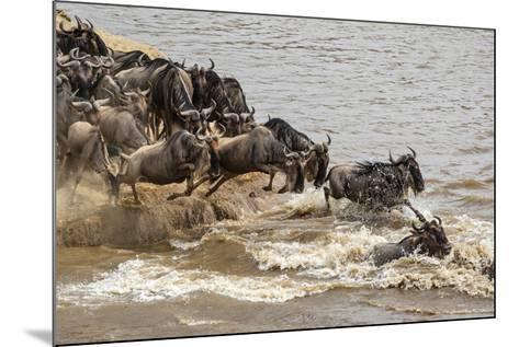 Wildebeest herd crossing Mara River in late summer, Masai Mara, Kenya, Africa-Adam Jones-Mounted Photographic Print