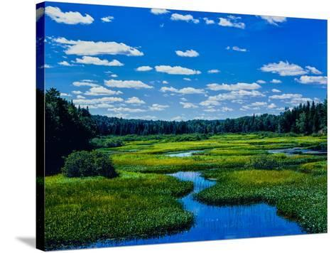 Grass growing in a river, Middle Branch Moose River, New York State Route 28, Adirondack Mountai...--Stretched Canvas Print