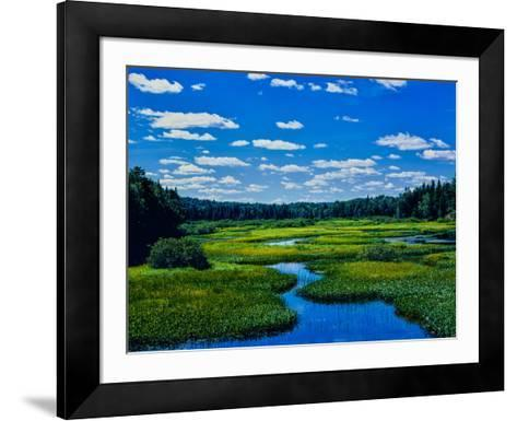 Grass growing in a river, Middle Branch Moose River, New York State Route 28, Adirondack Mountai...--Framed Art Print