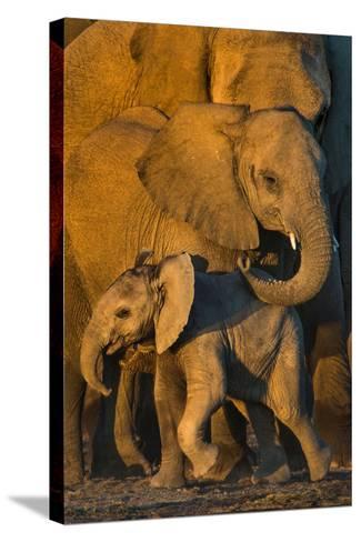 African Elephants (Loxodonta africana) at waterhole, Etosha National Park, Namibia--Stretched Canvas Print