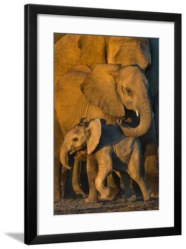 African Elephants (Loxodonta africana) at waterhole, Etosha National Park, Namibia--Framed Art Print