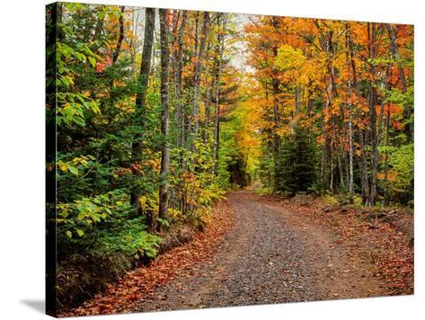Dirt road passing through a forest, Keweenaw Peninsula, Upper Peninsula, Alger County, Michigan...--Stretched Canvas Print
