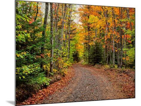 Dirt road passing through a forest, Keweenaw Peninsula, Upper Peninsula, Alger County, Michigan...--Mounted Photographic Print