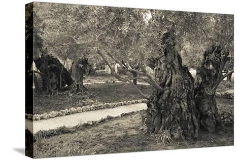 Garden of Gethsemane, Mount of Olives, Jerusalem, Israel--Stretched Canvas Print