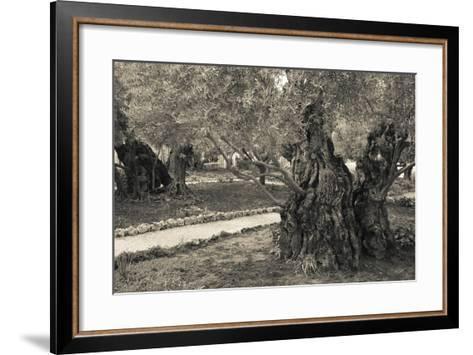 Garden of Gethsemane, Mount of Olives, Jerusalem, Israel--Framed Art Print