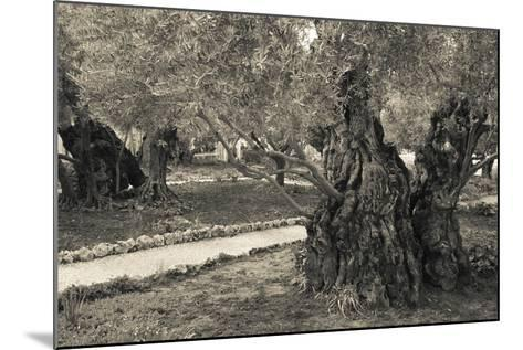 Garden of Gethsemane, Mount of Olives, Jerusalem, Israel--Mounted Photographic Print